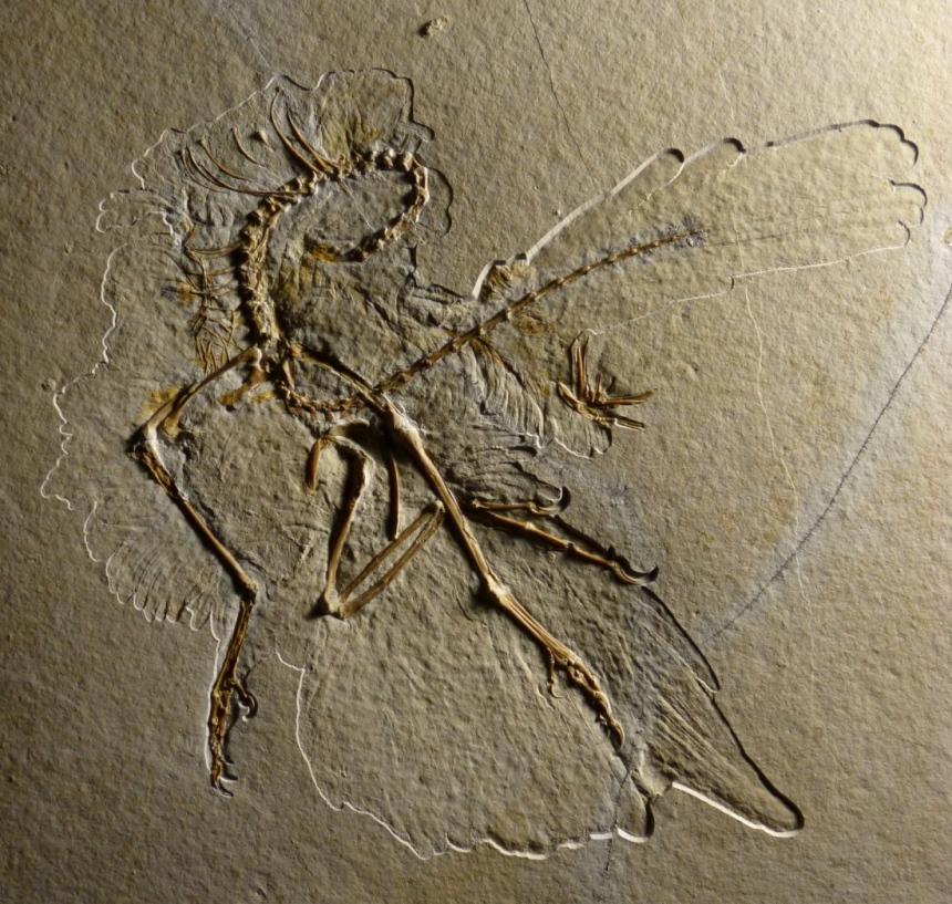 The 2011 specimen of archaeopteryx